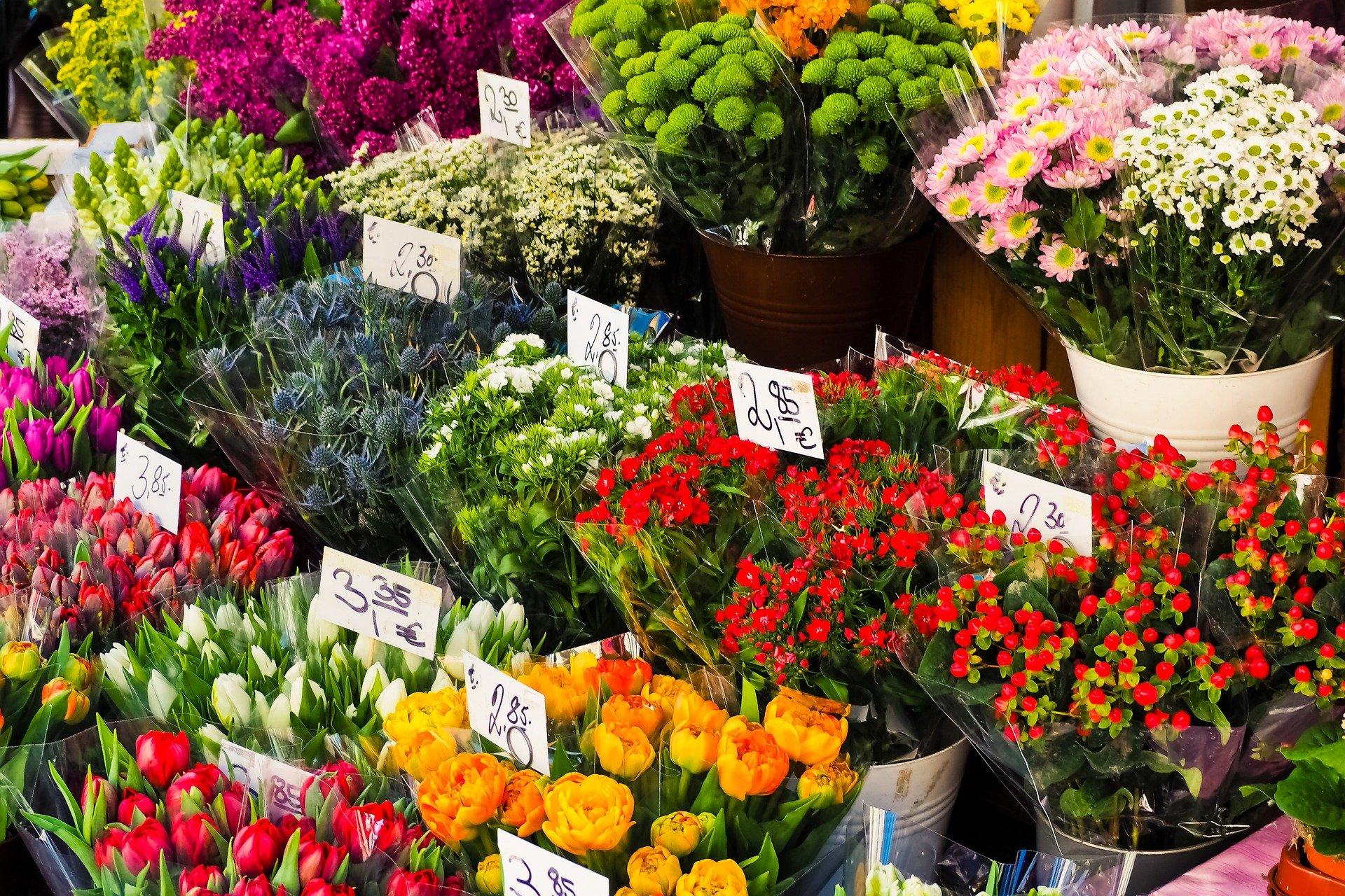 Viele verschiedenartige bunte Blumen